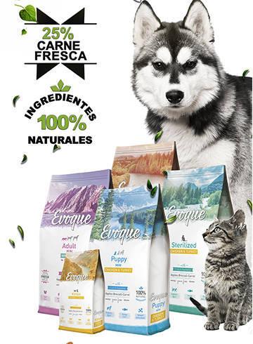 Carteles para las cristaleras de la tienda Perro Loco en Tenerife | 2017